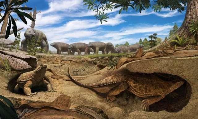 ancestral_tartaruga