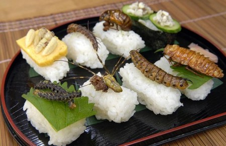 insetos-comestiveis2-450x290