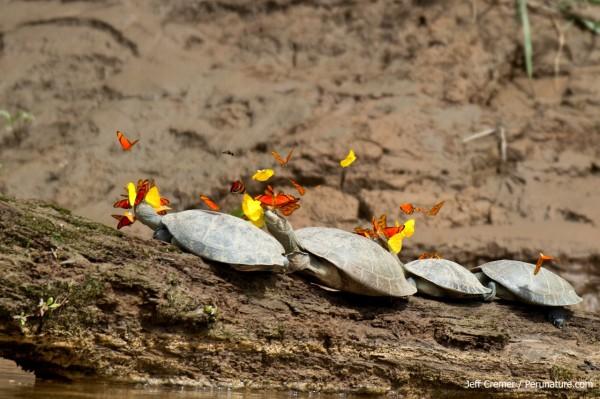 turtle06
