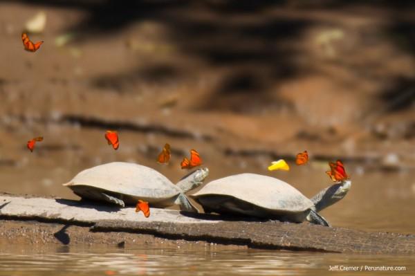 turtle07