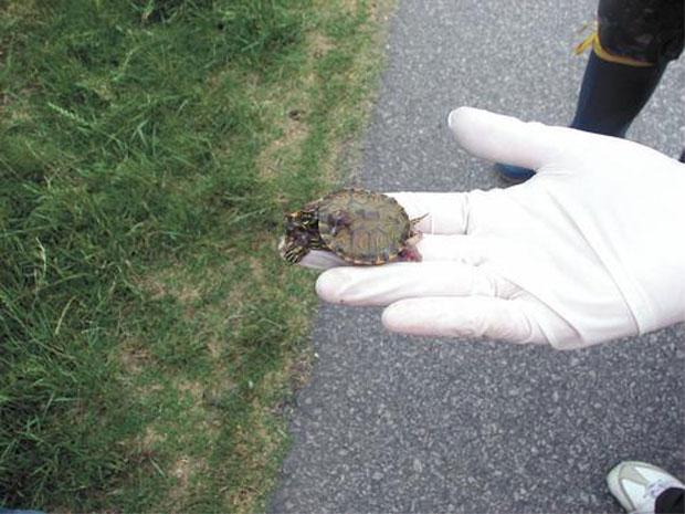 turtle12