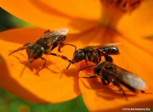 abelha-bora-cursos-cpt