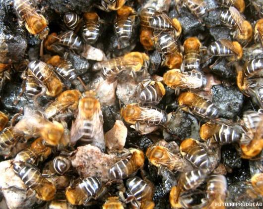 abelha-guaraipo-cursos-cpt