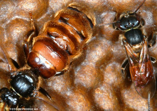 abelha-guirucu-cursos-cpt