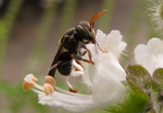 abelha-irai-cursos-cpt