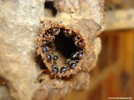 abelha-limao-cursos-cpt