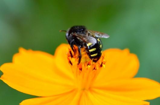 abelha-mandacaia-cursos-cpt
