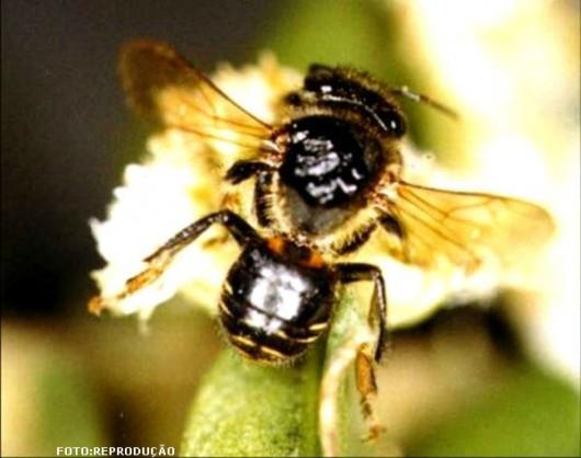 abelha-manduri-cursos-cpt