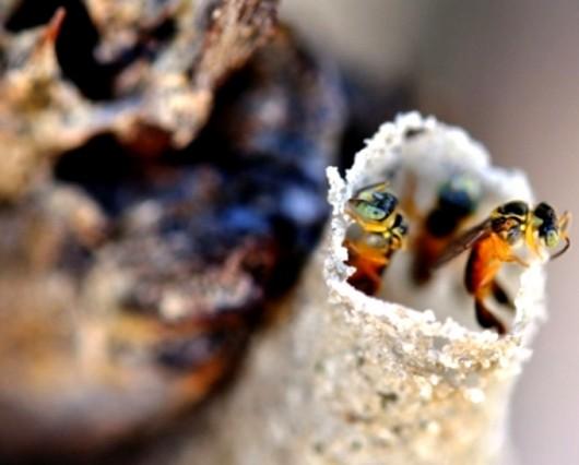 abelha-mirim-droryana-cursos-cpt