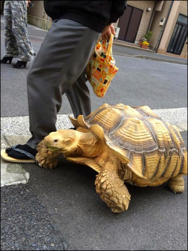 turtletok3